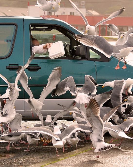 People feeding seagulls.