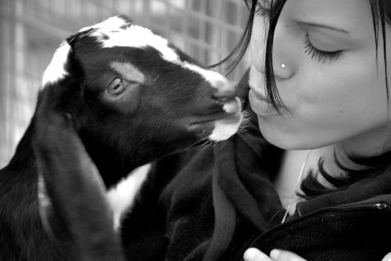 A young lady kissing a goat.
