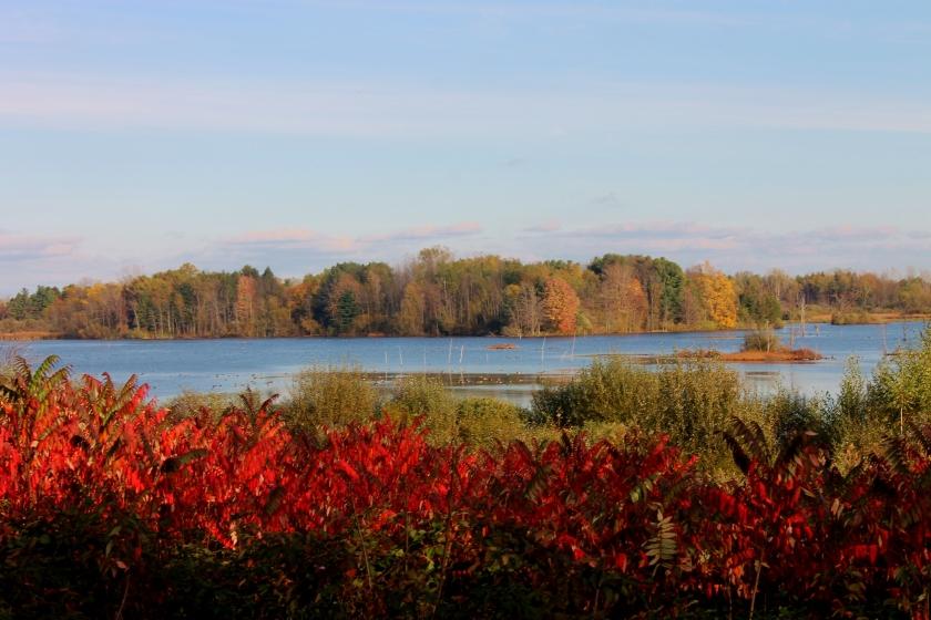 Ringneck Marsh at Iroquois wildlife refuge. Credit: USFWS