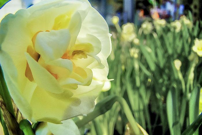 031415flower