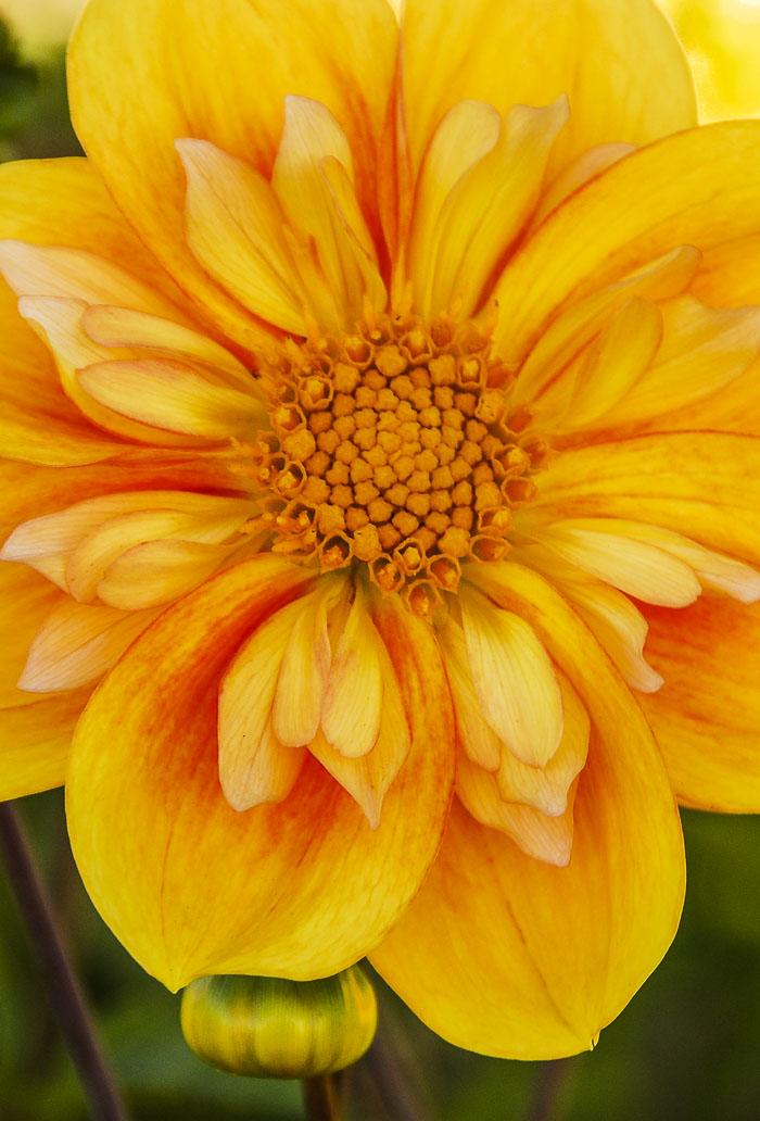 032615flower
