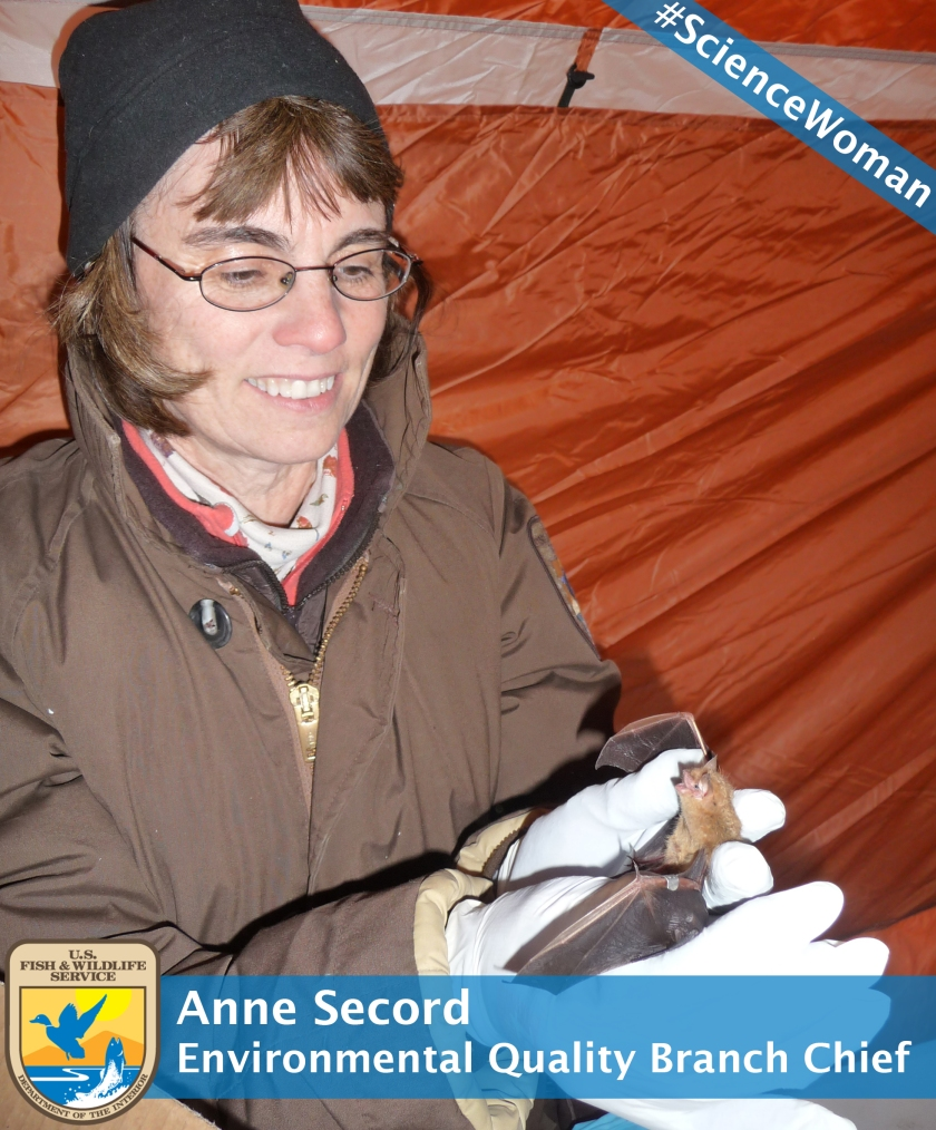 Anne Secord Branded