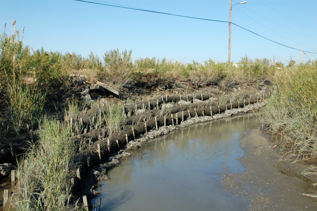 Coir logs, an example of a living shoreline technique using interwoven coconut fibers  bound together with biodegradable netting, are set in place at Gandy's Beach on the Jersey shore to provide temporary physical protection to a site while vegetation becomes established.