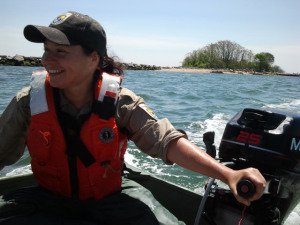 Kris driving a boat after putting up symbolic fencing for least tern on Menunketesuck Island in Long Island Sound.