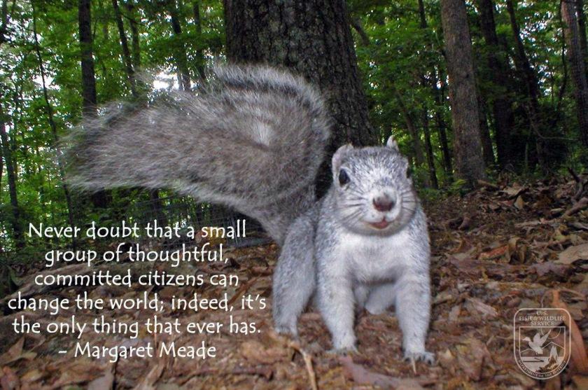 delmarva fox squirrel