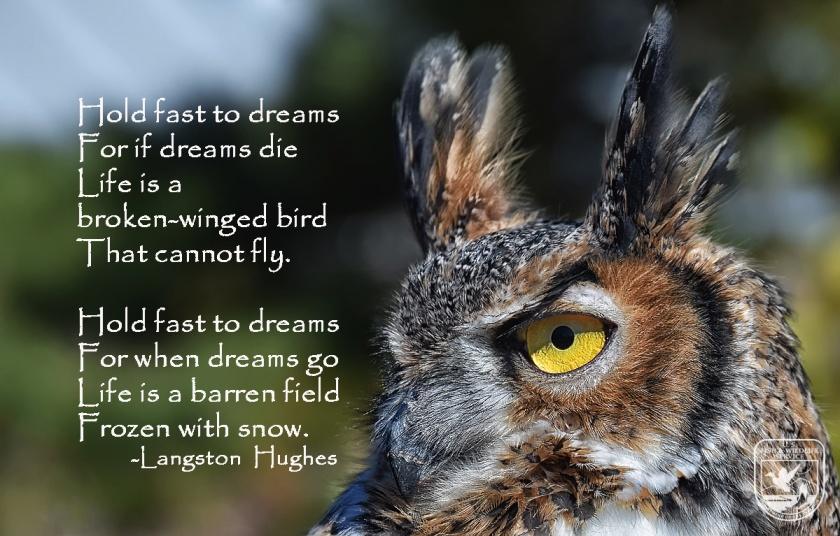 Langston Hughes - anne owl